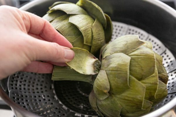 When ready, the leaves of the steamed artichoke should come off easily